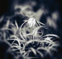 Fallen Angel by chamathe
