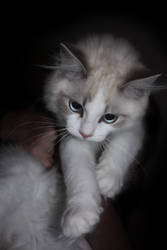 my kitten by astroyds