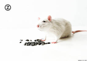 My rat 'Zyxel' by bargul