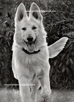 Chien/Dog by Sadness40