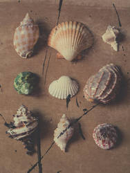 Shells Collection by Vorchonok