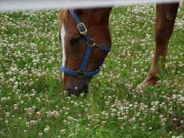 Horse by sweetaj6