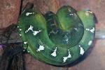 Snake by sweetaj6