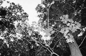 Trees by sweetaj6