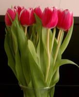Tulips by sweetaj6
