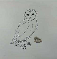 Realistic Owl by C-K-Whisper