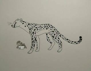 Cheetah by C-K-Whisper
