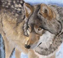 Wolf by bunnyartofficial