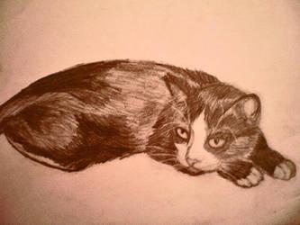 Cat by MariaAznar