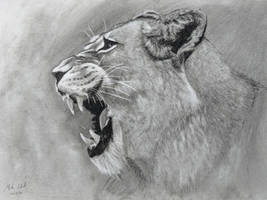Charcoal Lioness by Commint