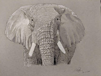 Elephant (Ink) by Commint