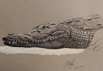 Crocodile (Ink and markers) by Commint