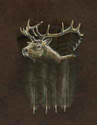 Elk Feather - Print by dittin03