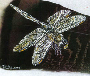 Dragonfly Feather by dittin03