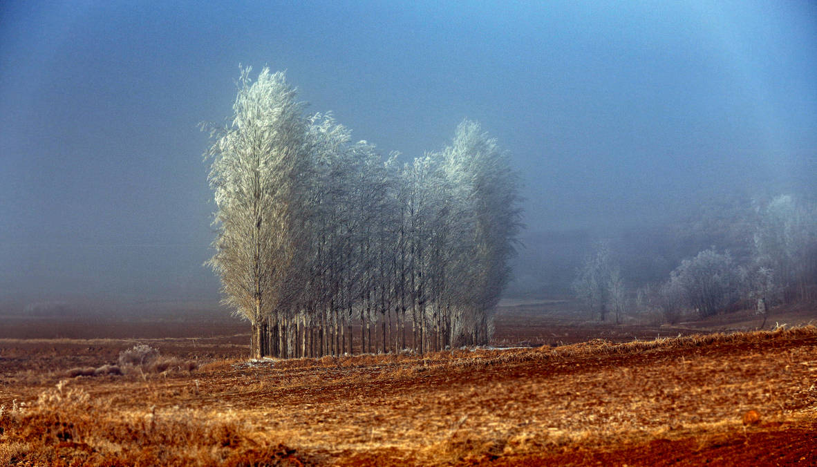 When the trees get old by kharax