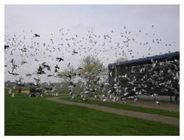 Pigeon Racing by dragonskin