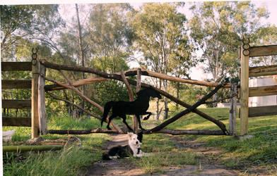 Horse Farm Gate by animel