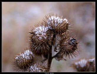 Frosty Spikes by Drazed