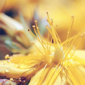 Yellow Beauty by Eldathiel