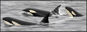Orca pod by Oracle88