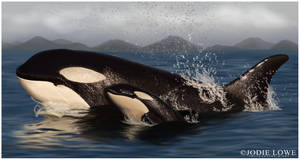 Orca mother and calf by Oracle88
