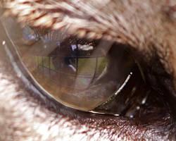 Puma's eye reflection by SnowPoring