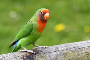 Lovebird by SnowPoring