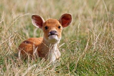 Oh Deer! by SnowPoring