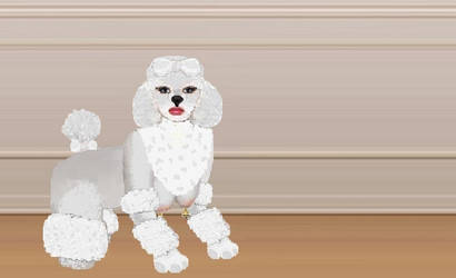 The Bichon-Frise poodle-girl by Nomad1978