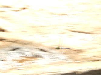 Speedy Dragonfly by grim22x7