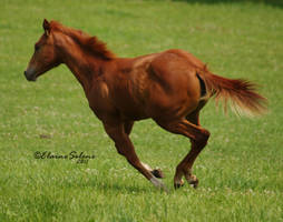 Foal - 16 by ElaineSeleneStock