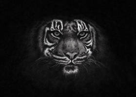 Tiger Of The Night by Infiltr8