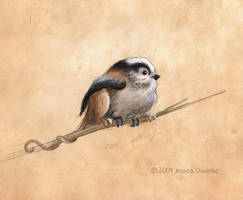 The Titmouse by JessicaDouglas