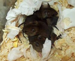 Mousepile by BearlyFeline