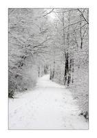 Winterwald by selester