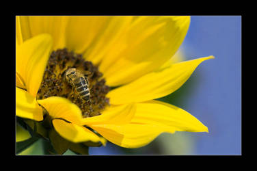 bee at work by selester