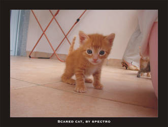 Scared Cat by spectro-
