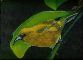 hawaiin birdy by BlissInMyCoffee