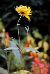 Blume by fotomatt66