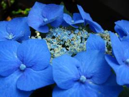 blue pinwheel flowers by adderx99