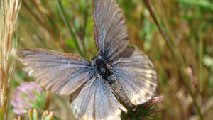 butterfly III by adderx99