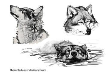 wolves by TheKunterbunter