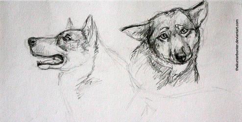 wolf sketches by TheKunterbunter