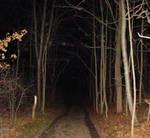Creepy Forest by RuralCrossroads360