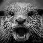 Shocked Otter by spike83