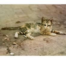 El Gato by Jude20