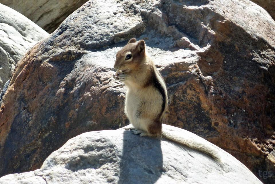 Happy Squirrel by JNLN