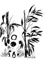 Panda by Sadjuk