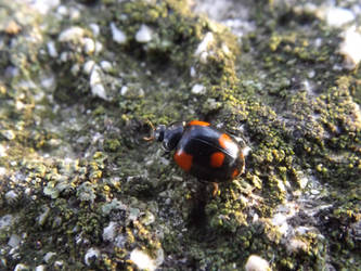 Cute Ladybug by mossagateturtle