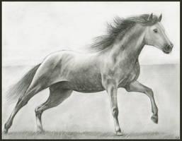 Run by xilovehorsesx